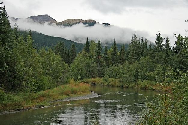 Pustynia, chmury, mgła, las drzew chmura alaska