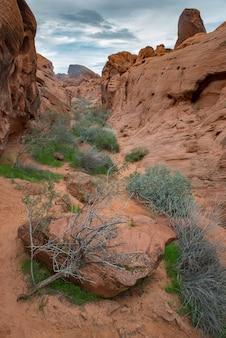 Pustynia skalna w nevadzie