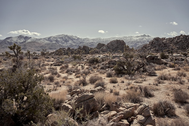 Pustynia ze skałami i suchymi krzakami z górami w oddali w południowej kalifornii