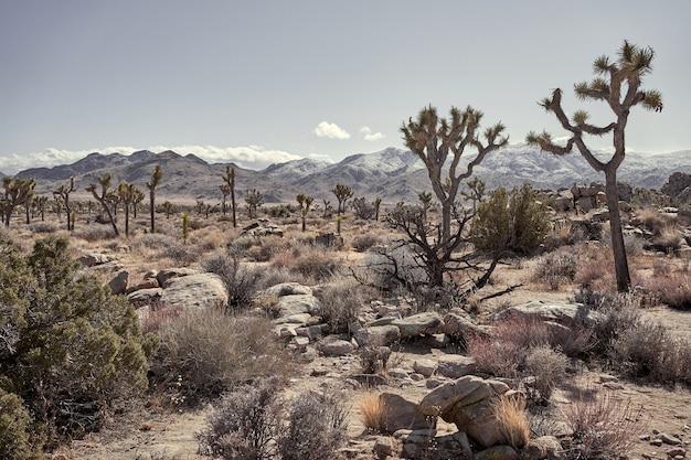 Pustynia ze skałami, kaktusami, drzewami i górami w oddali w południowej kalifornii