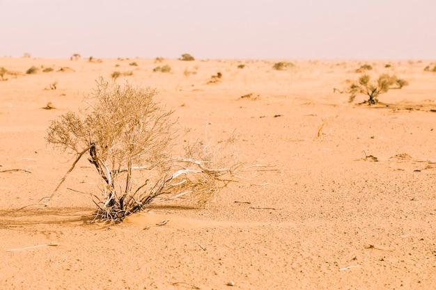 Pustynny krajobraz w maroku