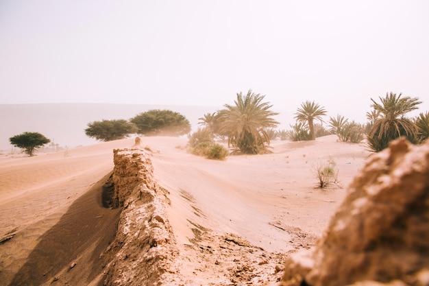 Pustynny Krajobraz Premium Zdjęcia