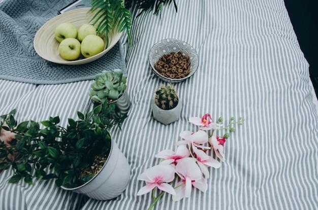Puszkuje z kwiatem, kaktusem i zbożem w talerzu na kocu w domu na łóżku