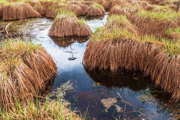 Puszysta piękna trawa torfowisko w blue swamp lake water.