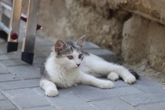 Puszyste dwa szarobiałe koty w słoneczny dzień bawiące się przy ścianie domu w pobliżu zestawu żelaznych schodów