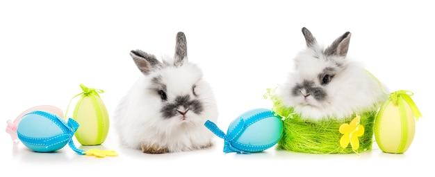 Puszyste króliczki z kolorowymi jajkami na białym tle