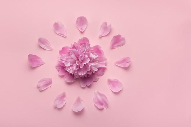 Puszyste różowe piwonie kwiaty na różowej powierzchni