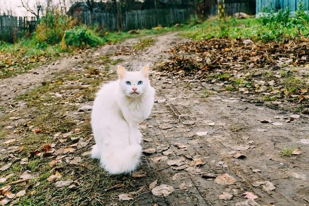 Puszysty biały kot