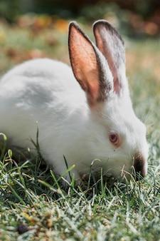 Puszysty biały królik chuje się w trawie