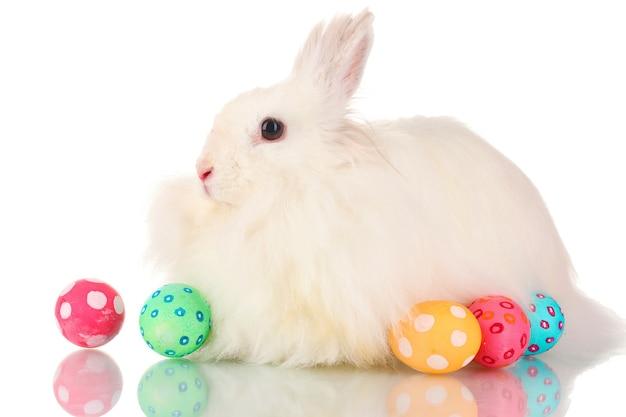 Puszysty biały królik z jajkami na białym tle