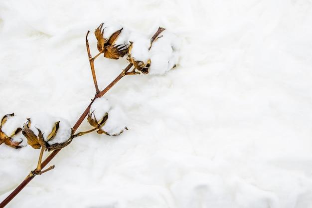 Puszysty biały kwiat bawełny. leżał płasko.