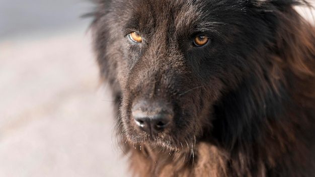 Puszysty czarny pies na zewnątrz z miejsca na kopię