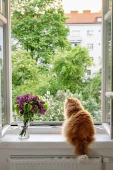 Puszysty czerwony kot cieszący się chwilą i patrzący na zewnątrz przez otwarte okno