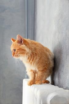Puszysty czerwony kot na ciepłym kaloryferze przy szarej ścianie