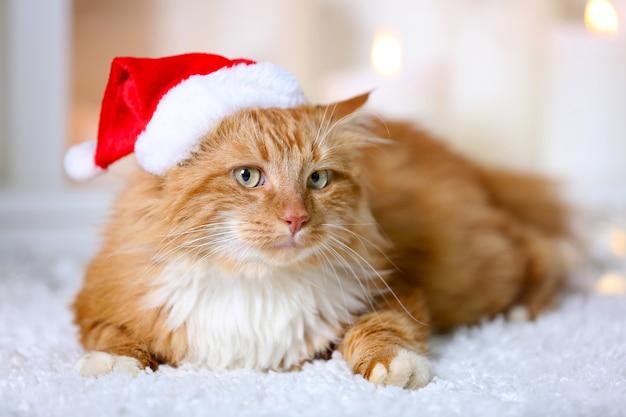 Puszysty czerwony kot w czapce mikołaja leżący na dywanie