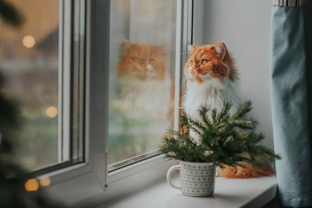 Puszysty imbirowy kot siedzi na parapecie otoczony gałęziami choinki.