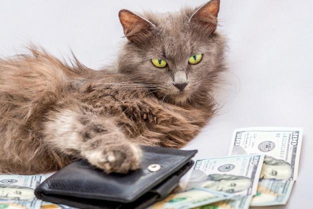Puszysty kot leży w pobliżu torebki i dolarów. symbol bogatego człowieka, odnoszącego sukcesy biznesmena