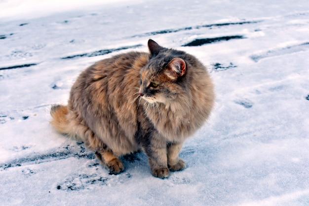 Puszysty kot na śniegu