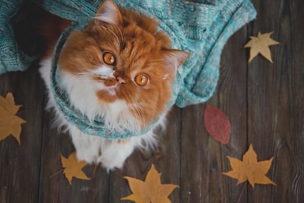 Puszysty kot siedzi na drewnianym stole otoczonym suchymi jesiennymi liśćmi.