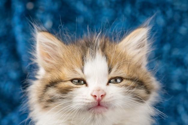 Puszysty kotek ładny portret