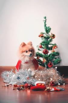 Puszysty pies pomeranian z czerwonym szalikiem przy choince, dekoracje sylwestrowe.
