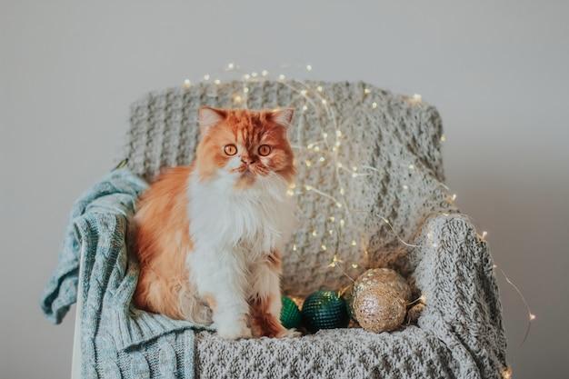 Puszysty rudy kot siedzi na krześle pokrytym dzianinowym kocem.