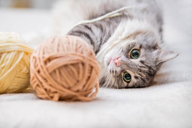 Puszysty śliczny szary kot bawi się kłębkami włóczki splątanymi nitkami, leży wśród motków