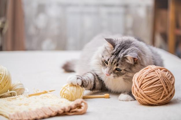 Puszysty śliczny szary kot bawi się kłębkami włóczki splątanymi nitkami, poluje na motek