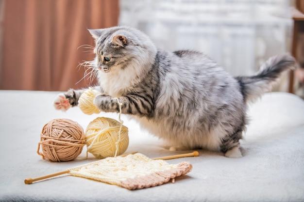 Puszysty uroczy szary kot bawi się kulkami splątanych nitek włóczki, skacze