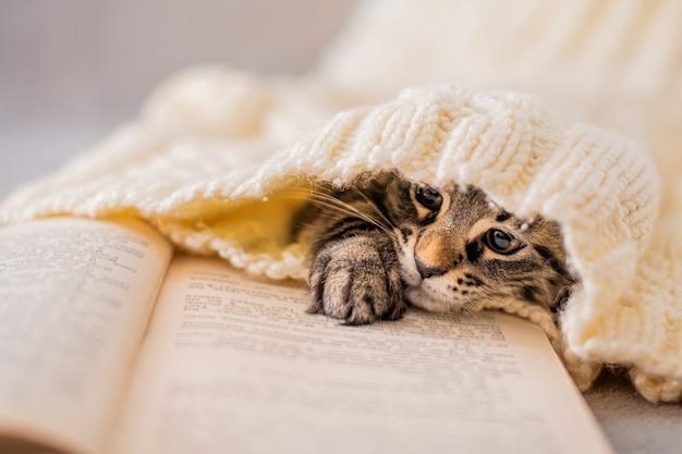 Pysk kociaka pręgowanego, schowany w dzianinowym swetrze, patrzący na stronę książki