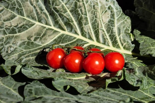 Pyszne pomidorki koktajlowe na liściach jarmużu oświetlone naturalnym światłem.