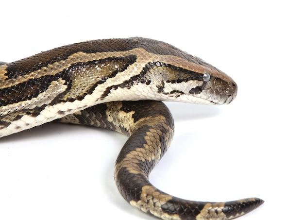 Python z bliska