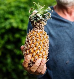 Ręki trzyma ananasowego organicznie produkty od gospodarstwa rolnego