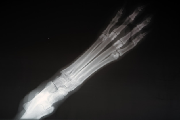 Radiografia łapy psa. rzeczywisty obraz x ray zranionej łapy psa.