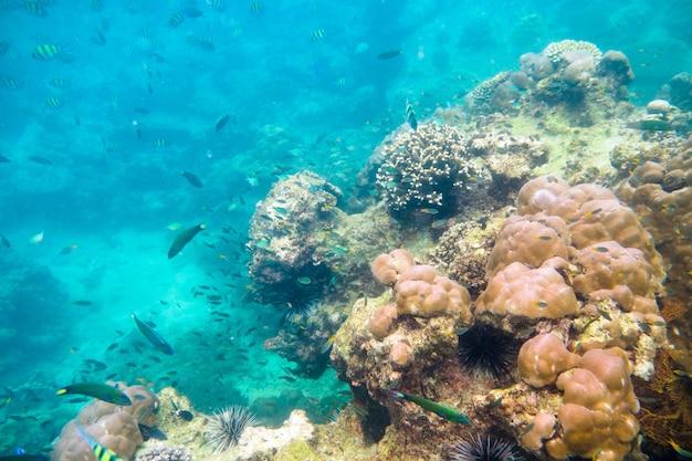 Rafa koralowa ze szkolną rybą na wyspie phi phi morze andamańskie