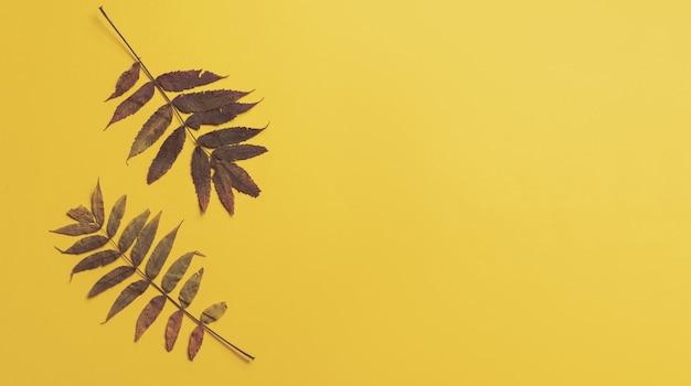 Rama kolorowe liście na żółtym tle z miejsca na kopię. koncepcja halloween lub dziękczynienia.