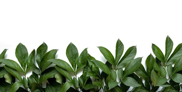 Rama kompozycji liści wykonana z zielonych liści na białym tle dzień ślubu dzień matki i kobiety