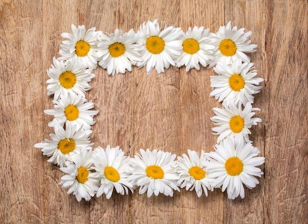 Rama kwiatów rumianku