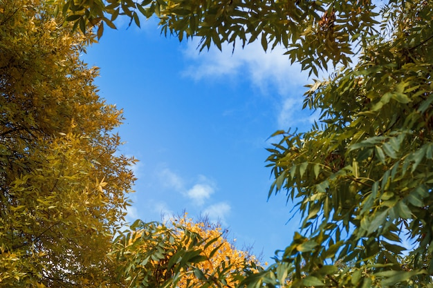Rama liści na tle nieba