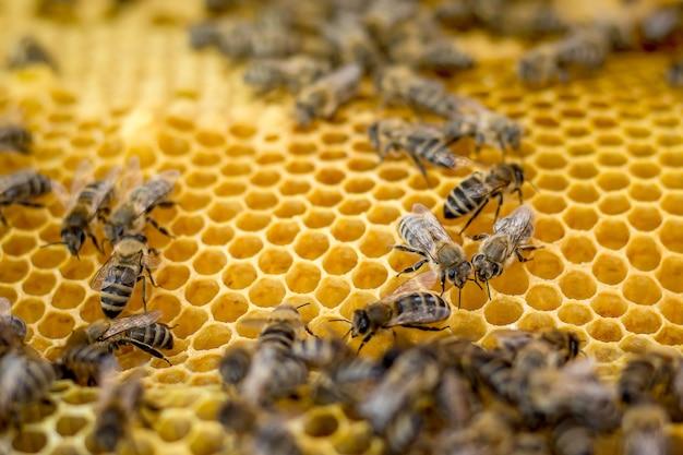 Rama o strukturze plastra miodu z pszczołami. lato na pasiece