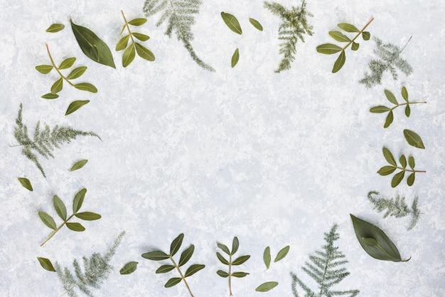 Rama od zielonej rośliny rozgałęzia się na stole
