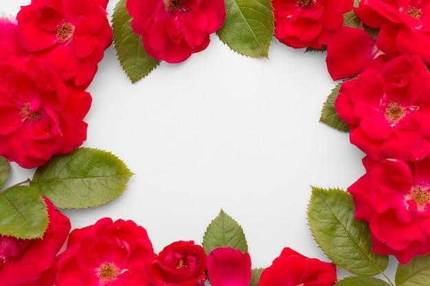 Rama płasko leżących róż lodowych