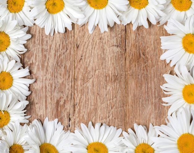 Rama stokrotka kwiaty rumianku