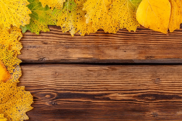 Rama suchych żółtych liści na stare drewniane tła