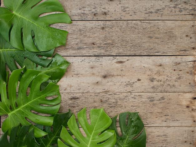 Rama tropikalnych liści monstera na stare drewniane tła. miejsce na tekst. płaski lay, widok z góry