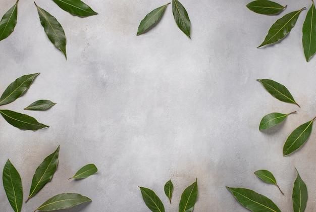 Rama wawrzynu na szarej powierzchni świeżych liści laurowych