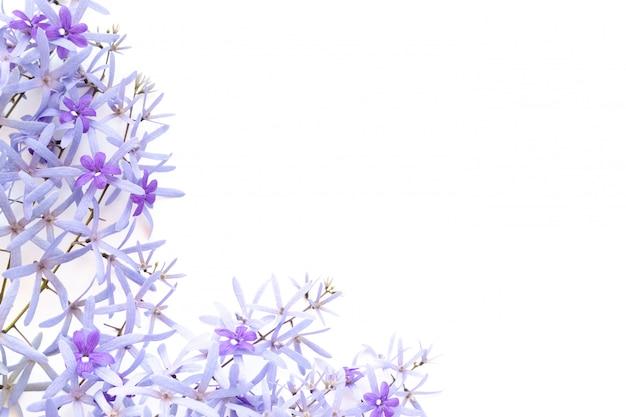 Rama wykonana z fioletowych kwiatów na białym tle