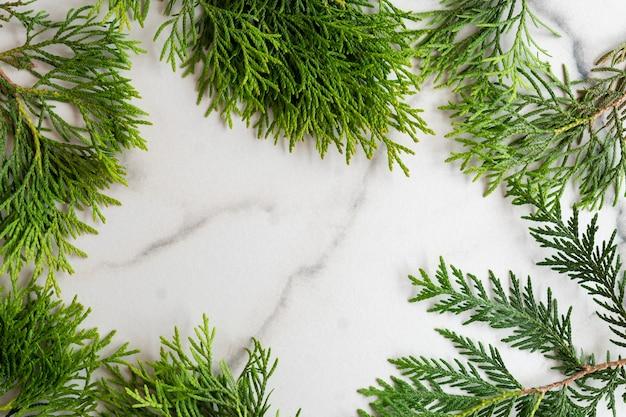 Rama wykonana z gałęzi thuja białego cedru na białym tle marmuru, leżał płasko. makieta karty z miejsca na kopię.