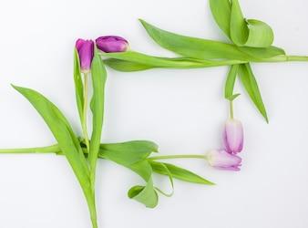 Rama wykonana z kwiatów tulipanów na białej powierzchni