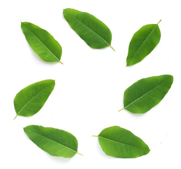 Rama wykonana z liści eukaliptusa na białym tle.